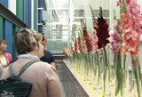 Neeilinis vaizdas Panevėžyje: skleidžiasi išskirtinio grožio gėlės