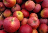 Ant vaikų stalo grumiasi lenkiški ir lietuviški obuoliai