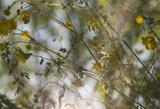 Šį augalą rasite visuose miškuose: veikia stebuklingai
