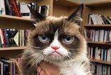 Liūdna žinia gerbėjams: nugaišo nepatenkinta išraiška garsėjęs katinas