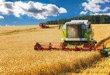 ES prognozuojant didesnį grūdų derlingumą, žemdirbiai rekordų nesitiki