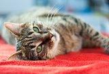 Naujas augintinis namuose: TOP4, ką privaloma žinoti apie kates