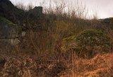 Ar nuotraukose surastumėte pasislėpusius Lietuvos kariuomenės snaiperius?