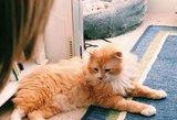 Malaizijos oro bendrovė kaltinama dėl katės dingimo