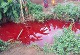 Kaip per apokalipsę: žmones šokiravo it krauju pasruvusios upės