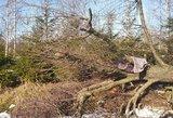 Skaudi nelaimė Vilkaviškio rajone: susižalojo medį pjovęs vyras