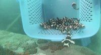 Tailando mokslininkai bando gelbėti ypatingus ryklius: nyksta dėl egzotinio maisto mėgėjų (nuotr. stop kadras)