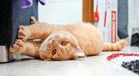 Katinas drasko baldus (nuotr. Shutterstock.com)