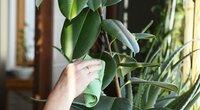 Pasakė, kada geriausias laikas persodinti gėles: įsiminkite  (nuotr. Shutterstock.com)