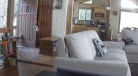 Peržiūrėję kamerų įrašą, negalėjo patikėti savo akimis: namų duris išlaužė visai ne vagys (nuotr. stop kadras)