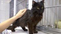 Gyvūnų globėjai ir botanikai šokiruoti – žmonės ieško juodų katinų ir mistinių augalų juodajai magijai (nuotr. stop kadras)