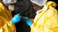 Afrikos ir Vakarų mokslininkų bendradarbiavimas tiriant naujų virusų atsiradimą tampa kaip niekad svarbus (nuotr. SCANPIX)