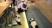 Šunys-pandos (nuotr. stop kadras)