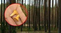 Grybautojų vaizdas Lietuvos miškuose nedžiugina – klimatologai turi blogų žinių (nuotr. stop kadras)