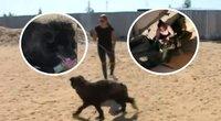 Neeilinė šuns gelbėjimo operacija: 7 metus nematė šviesos ir žmonių (nuotr. YouTube)