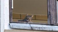 Katinas (nuotr. Broniaus Jablonsko)