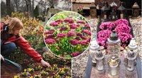 Kapų gėlės (tv3.lt fotomontažas)