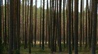Miškas (nuotr. stop kadras)