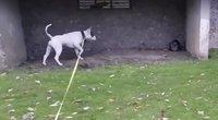 Šuns ir katės akistata (nuotr. stop kadras)