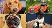 """Gyvūnų """"Instagram"""" profiliai  (tv3.lt fotomontažas)"""