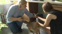 Gyvūnų globėjai sunerimę dėl atvežamų stirnų jauniklių: to daryti negalima
