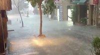 Liūtis Stambule (nuotr. stop kadras)