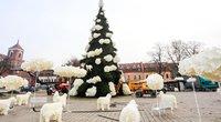 Parodė, kaip atrodys Kauno kalėdinė eglė (Teodoras Biliūnas/Fotobankas)