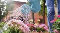 Gėlių laistymas (nuotr. Shutterstock.com)