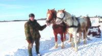 Sniegą valo arklių tempiamu padargu (Dimitrijaus Kuprijanovo nuotr.)