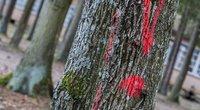 Kai kurie miškų savininkai slepia pajamas už medieną (nuotr. JP/Gedimino BALČIŪNO)