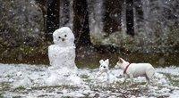 Žiema sostinėje (nuotr. Fotodiena/ Justinas Auškelis)