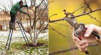 Ekspertas atskleidė auksinius sodo patarimus: nekartokite šių medžių priežiūros klaidų  (nuotr. Shutterstock.com)