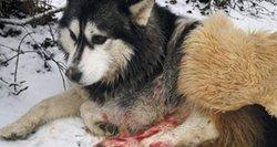 Sužaloto šuns likimas parodė tikrąjį politikės veidą