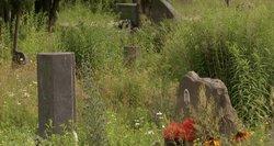 Artimieji pasipiktinę: Vilniaus kapinėse žolės niekas nepjauna, nes niekas neprivalo