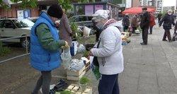 Augintojai liūdi: lietuviškas daržoves atiduoda už centus