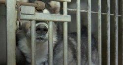 Neatsakingas žmonių poelgis – gyventojai atsikrato gyvūnų