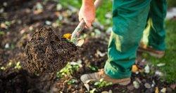 Kuo skubiau tai padarykite savo sode: pavėlavus – gailėsitės