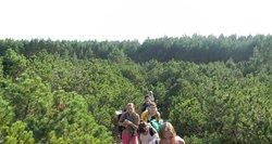Siekia atkurti Neringos miškus