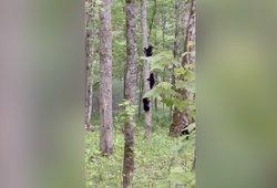 Miške pamatytas vaizdas merginą privertė griebti kamerą: negalėjo atitraukti akių