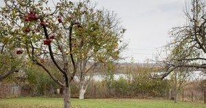 Obelis rudenį  (nuotr. Shutterstock.com)