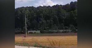 Radviliškio rajone gyventojus nustebino įspūdingo dydžio retas gyvūnas (nuotr. stop kadras)