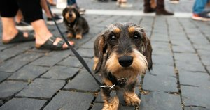 Šuo (nuotr. Fotodiena/Justino Auškelio)