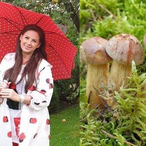 Kazlauskienė – apie netikėtai atrastą grybų pulką ir baimę kelti koją į mišką: dėl visko kalta liga