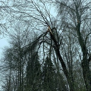 Dėl iškritusio sniego virto medžiai: ugniagesiai iškvietimus skaičiuoja dešimtimis