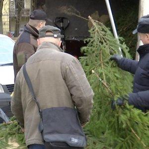 Karantinas sužlugdė seną miškininkų tradiciją – eglišakių nedalins