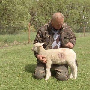 Ukmergės rajone vilkas dėl grobio puolė ir sužeidė ūkininką