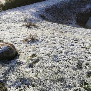 Prieš didžiųjų šalies eglučių įžiebimą dalį Lietuvos nuklojo sniegas