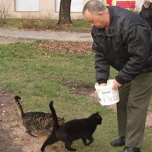 Vilnietis – katinų globėjas: kai mane ištiko klinikinė mirtis, pamačiau katinus