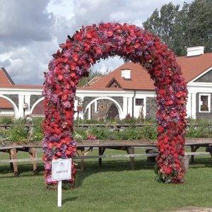 Pakruojo dvare – 15 meilės arkų iš gėlių: po jomis galima ir tuoktis