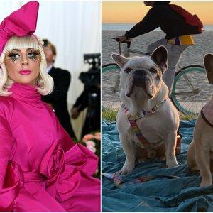 Aiškėja naujos detalės apie pagrobtus Lady Gagos šunis ir pašauto vedžiotojo būklę